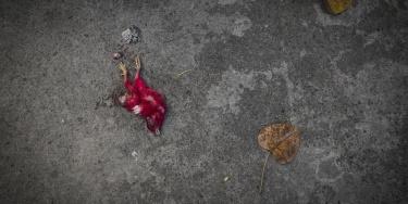 Dead Living - Manila