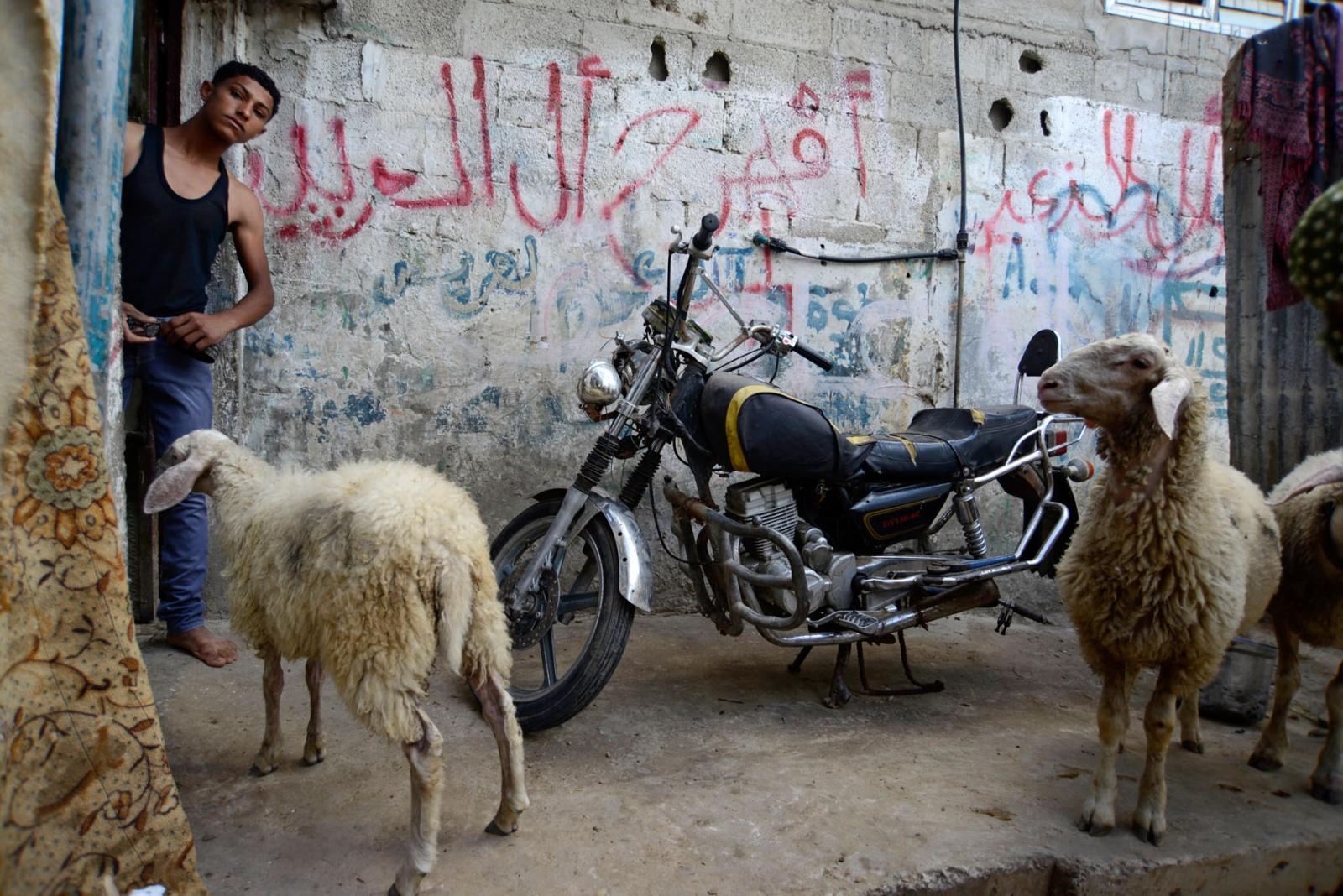 Dead Living _ Gaza Strip