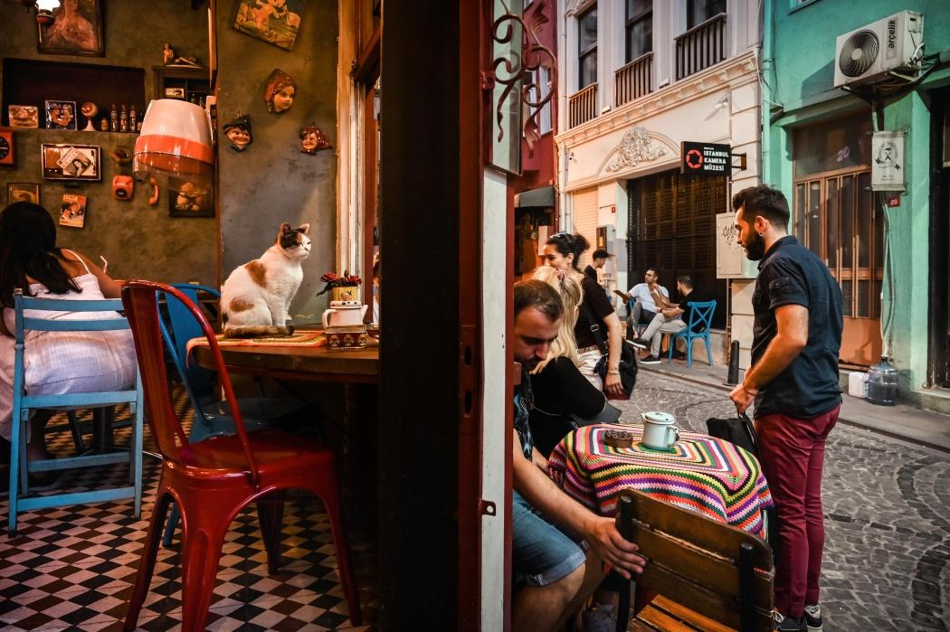 The Naftalin K coffee, also known as the Cats' coffee, is located in Fener, one of the most creative and colorful neighborhoods in Istanbul Il cafè Naftalin K, noto anche come il cafè dei Gatti, si trova a Fener, uno dei quartieri più creativi e colorati di Istanbul